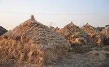 安徽:秸秆电厂协议使用农作物秸秆量实现三连增