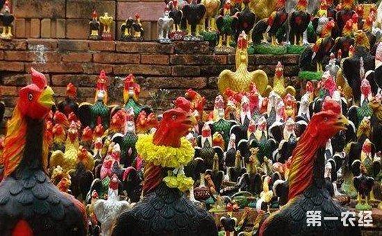"""新奇!公鸡居然当起了""""神职人员""""  泰国奇特公鸡神庙备受供奉"""