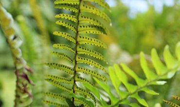 常见的蕨类植物有哪些?