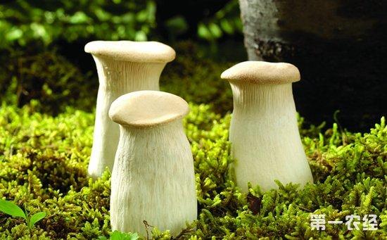 食药监总局发布最新风险提示  预防野生毒蘑菇中毒事件发生