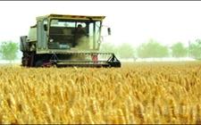 河南:夏粮总产量达710.8亿斤 创下历史新高