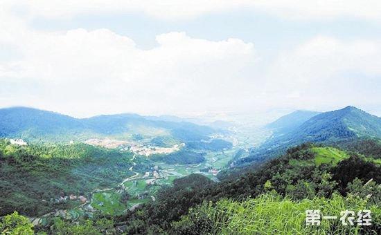湖北:深化集体林权制度改革 强化林权权益保护