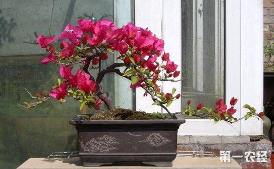 4种常见盆栽植物的扦插步骤介绍