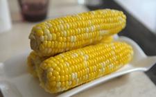 转基因玉米:国家允许11种被用作饲料