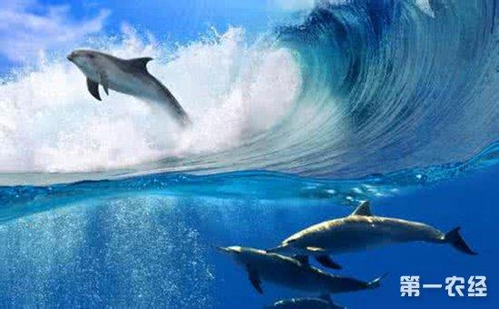 包括依赖海洋而生的鱼类,爬行类,鸟类和哺乳类动物.