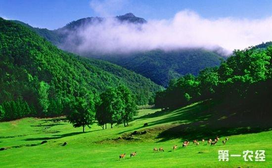 集体林权制度改革:让山区走向绿色发展