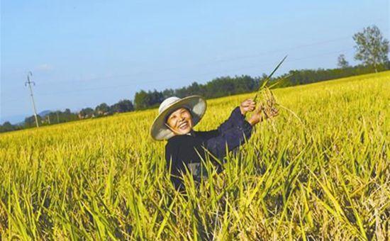 湖北枣阳:丘陵岗地上的高效种植模式