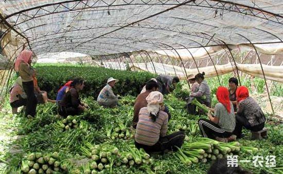 宁夏银川:推进农业综合改革 实现特色农业建设
