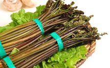 甘肃特产——蕨菜