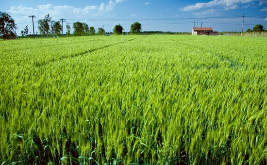 河南:夏粮总产量再创历史新高