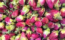 甘肃兰州特产——苦水玫瑰