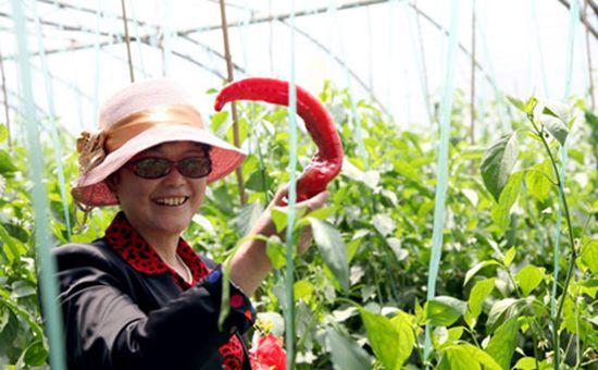 山东援藏:雪域高原上的果蔬大棚