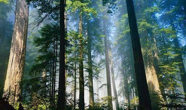 陕西:林业科技助扶贫