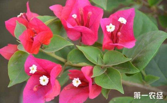 10种常见盆栽植物的扦插方法介绍!捡个枝条养一盆