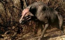 巨猪:6500万年前的上古猪种