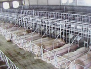 养猪场的猪粪猪尿怎么处理?
