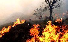 广西森林火灾综合防控能力显著增强 五年来无重特大火灾发生