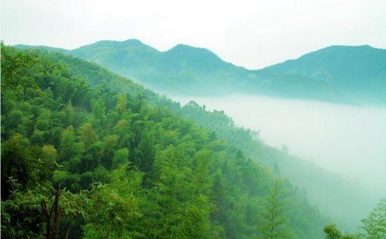 浙江召开林业科技创新大会 推动林业现代化发展