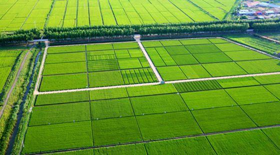 多项农村土地改革试点将在今年迎来收官
