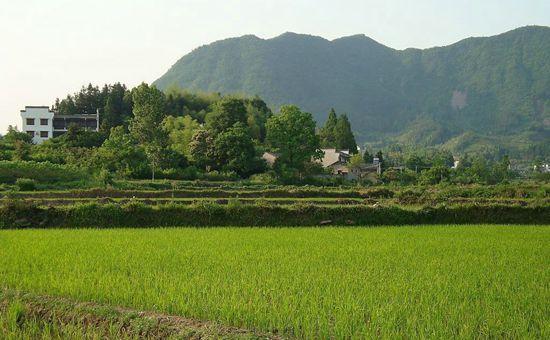 安徽省加快发展绿色农业 促进农民就业增收