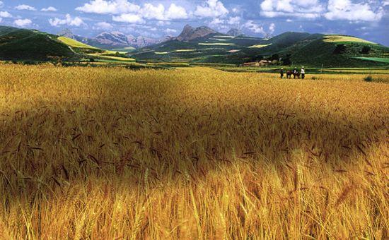 """宁夏被列入国家""""优质粮食工程""""重点支持省份"""