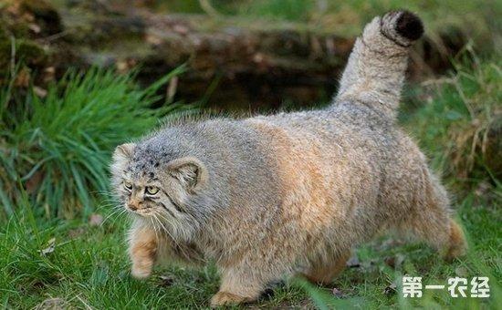 沙漠里鼠类动物图片