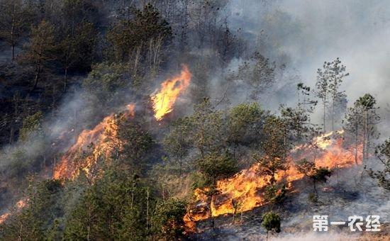 重庆:高温持续 发布森林火险红色预警
