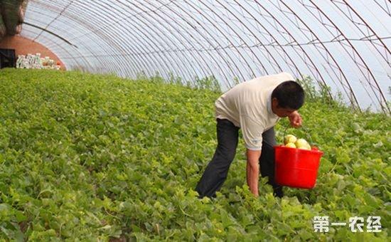 内蒙古扎兰屯市:温室大棚助力集体经济发展