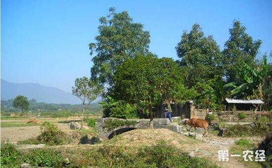 国家推出三大福利解决农村养殖污染问题