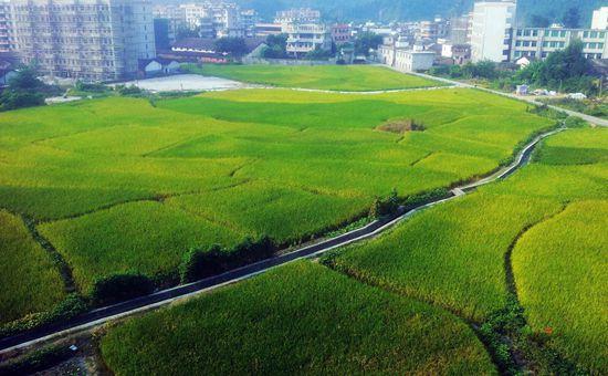 福建明溪:强化农业生产安全是关键