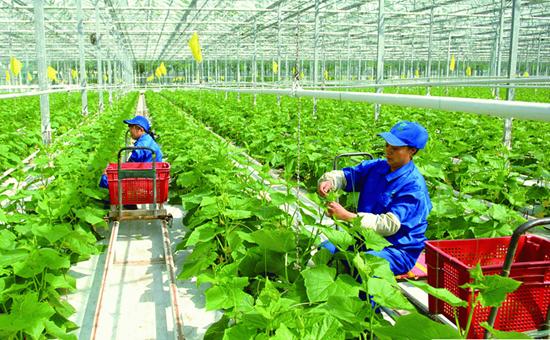 河北:全面提升农业品牌竞争力