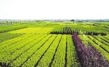云南:2017昆明农机展,推进农业现代化