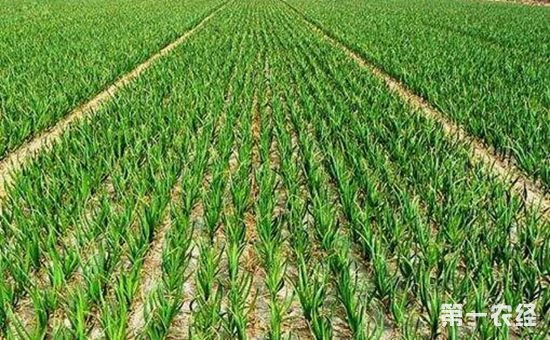 农民新增4项补贴:从各个方面支持新型农业经营主体的发展