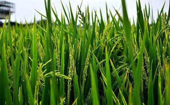 上海:积极展开新农药试验