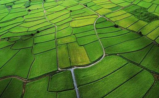 云南陆良:将建万亩高稳产粮田