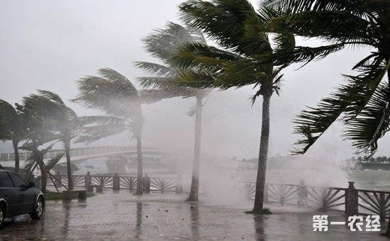 """农业部:要加强第9号台风""""纳沙""""的防御工作"""