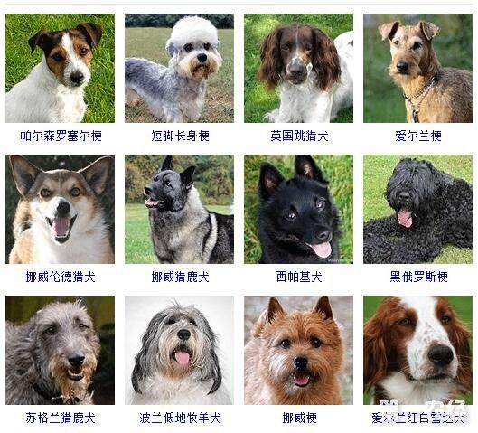 小型宠物狗品种图片大全_小型宠物狗品种图片大全_小型犬品种大全及图片