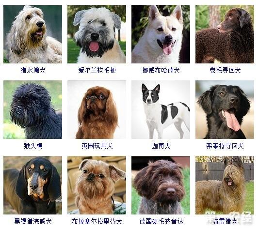 护卫犬品种_昆明犬有几个品种_犬品种