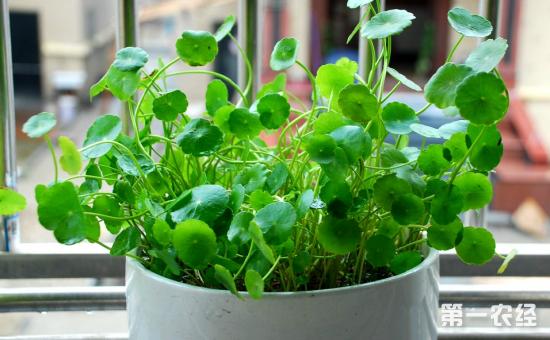 10种常见盆栽植物的夏季浇水技巧介绍!