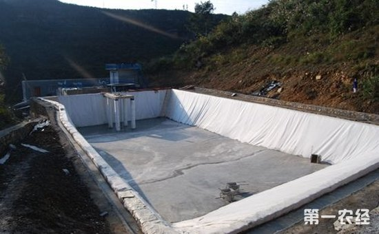 养泥鳅的池子怎么建 泥鳅养殖池建设