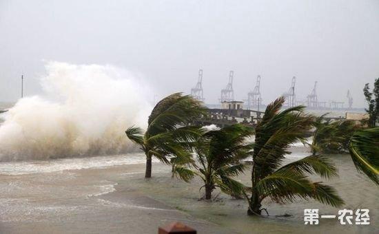 """福建省发布关于做好9号台风""""纳沙""""防御工作的紧急通知"""