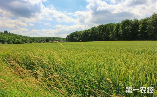 农业部:发展绿色农业是一件大事