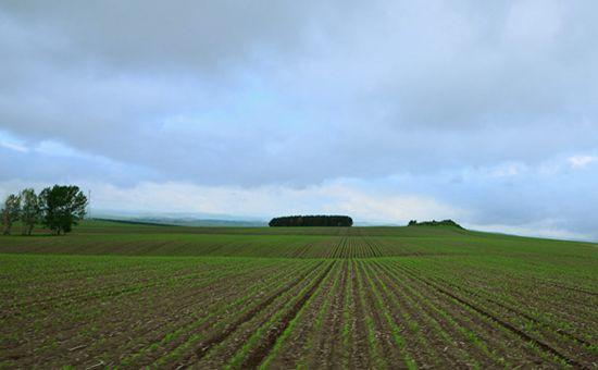 吉林梨树县全面推进农业产业结构调整