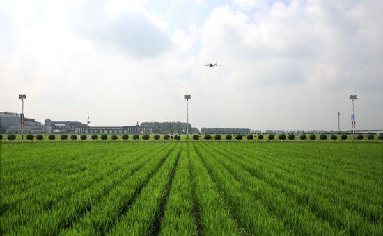 吉林:推进农业三大体系建设 发展现代农业