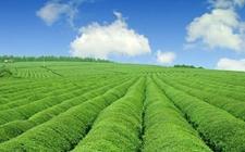 北上广的智能化农业发展模式