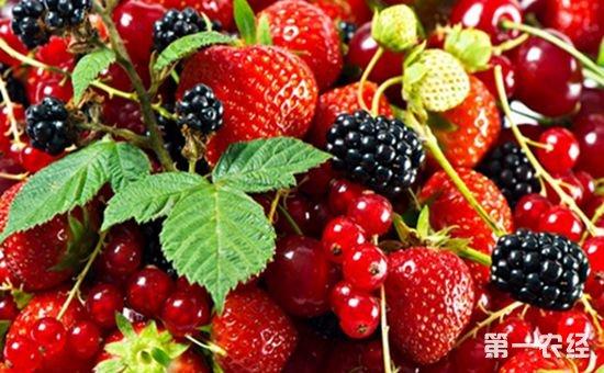 厦门海沧自贸园区上半年进口水果增长迅速