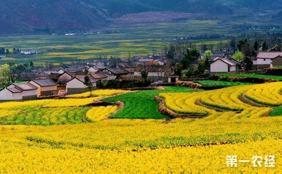 全国休闲农业和乡村旅游产业正式联盟
