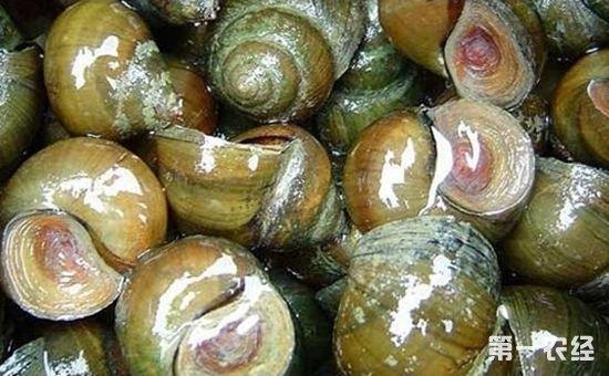 广西梧州:大力发展稻螺生态综合种养
