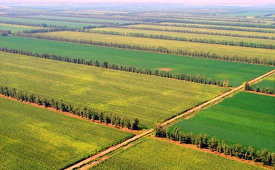 """吉林松原:绿色农业""""绿""""全城"""
