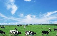 2018中东国际农业及畜牧展,有效改善先天条件限制